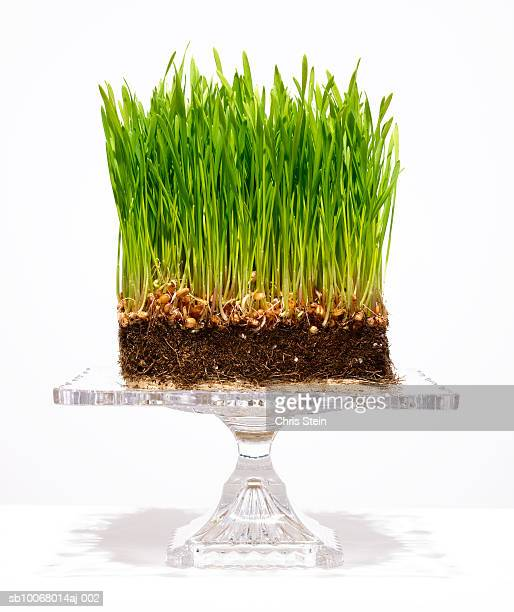 Grass with soil and roots on cake tray