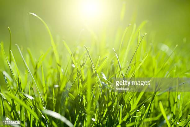 草、太陽の光 - 自生 ストックフォトと画像