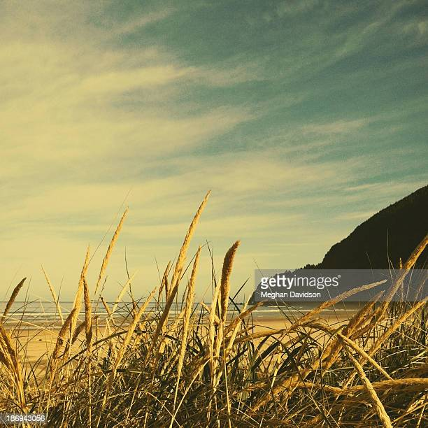 grasses by the sea - meghan stock photos and pictures