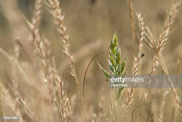 Grasses, Grasse, Alpes Maritimes, France, Europe