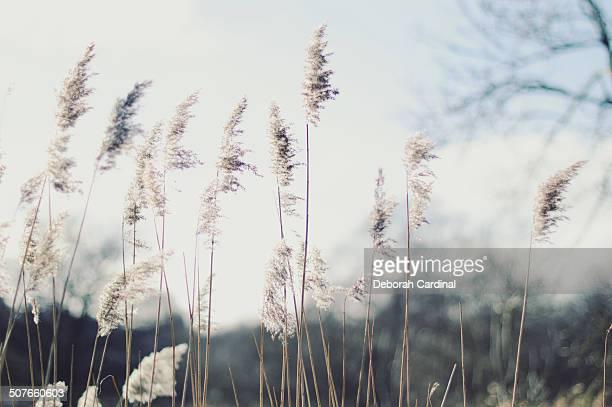 grasses - サットンコールドフィールド ストックフォトと画像