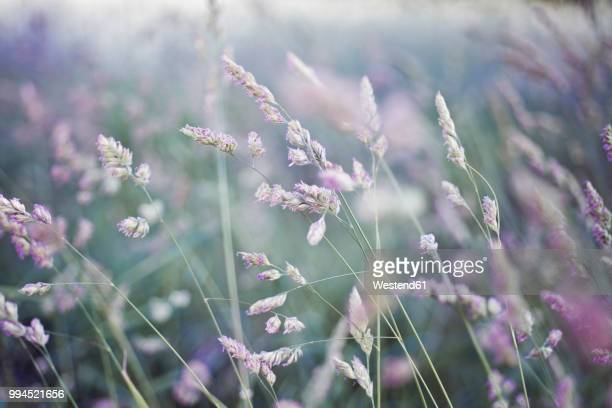 grasses - gras stock pictures, royalty-free photos & images