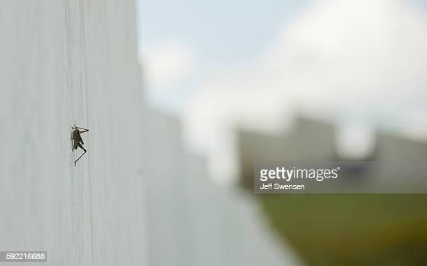 A grasshopper climbs along the marble slab monuments to each individual victim of Flight 93 at memorial site at the Flight 93 National Memorial in...