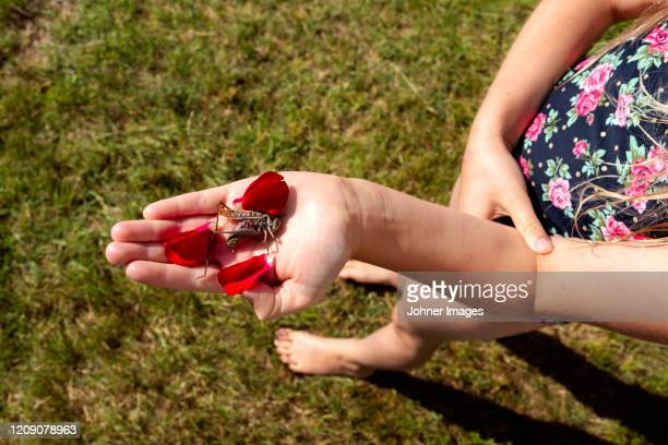 grasshopper on girls hand - dead girl stock pictures, royalty-free photos & images