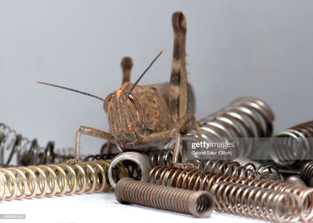 Grasshopper on springs : Foto de stock