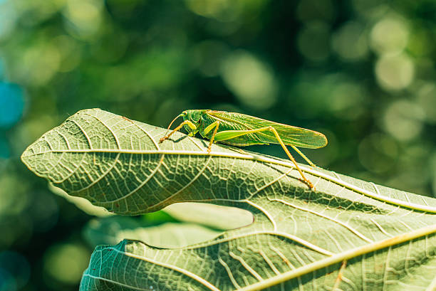 analysis of the grasshopper and the Extracts from this document introduction on the grasshopper and the cricket in the sonnet, on the grasshopper and the cricket by john keats, the message of the poem is foregrounded in the very first line of the octave.