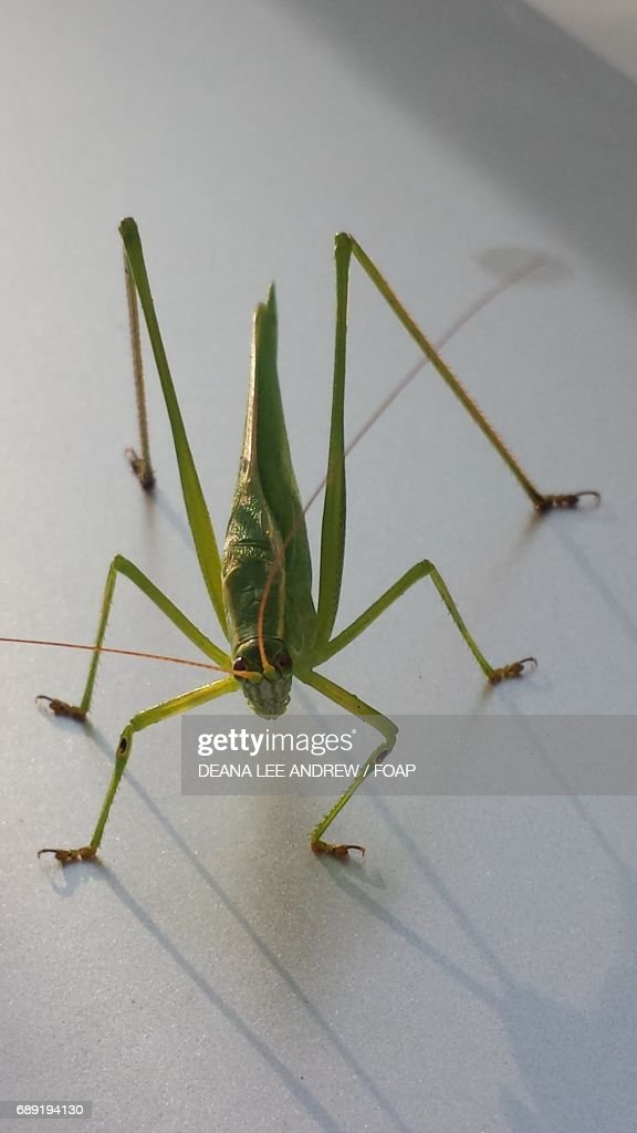 Grasshopper on the floor : Stock Photo