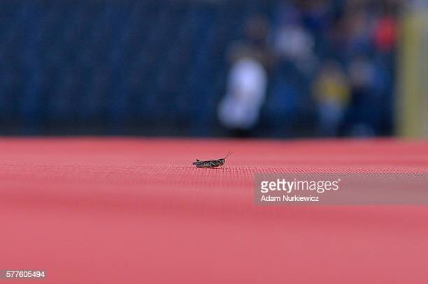 Grasshopper sits on the landing during men's high jump decathlon during the IAAF World U20 Championships Day 1 at Zawisza Stadium on July 19 2016 in...