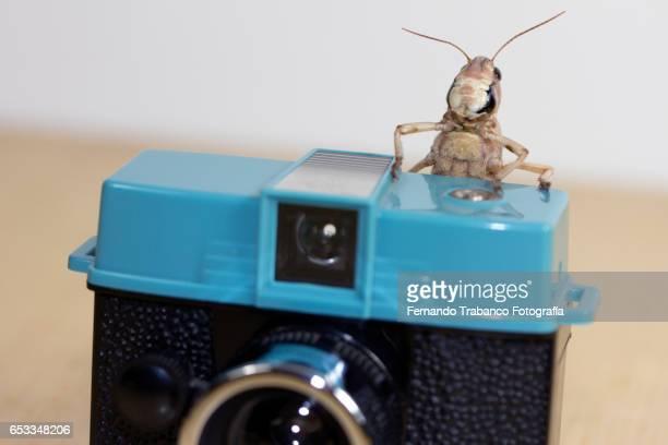grasshopper taking a photo