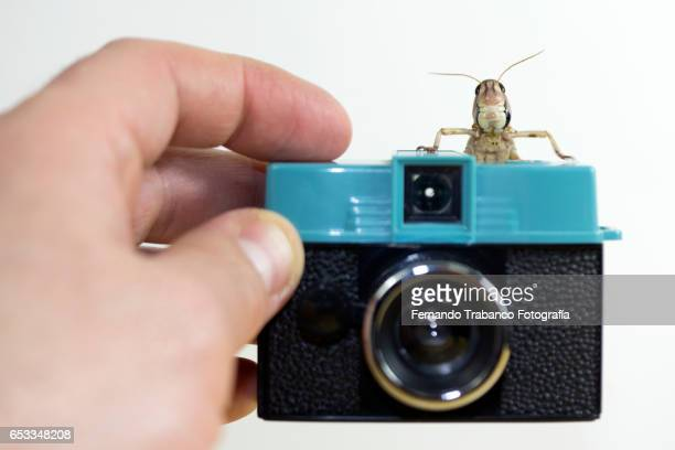 grasshopper taking a photo
