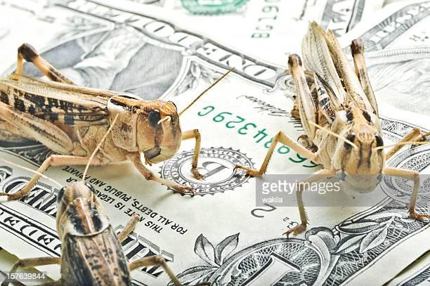 grasshoppers em notas de dólar-finanças tema - buck teeth - fotografias e filmes do acervo