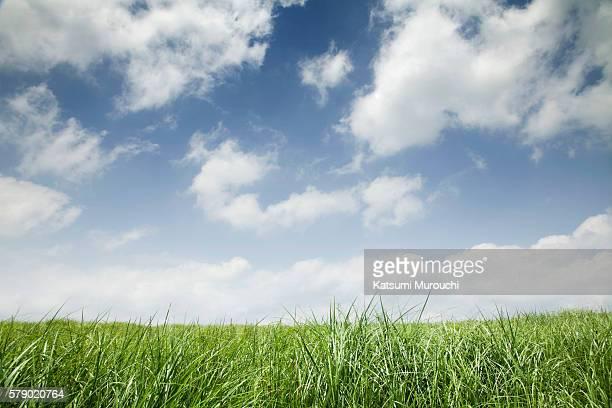 Grassland and clouds