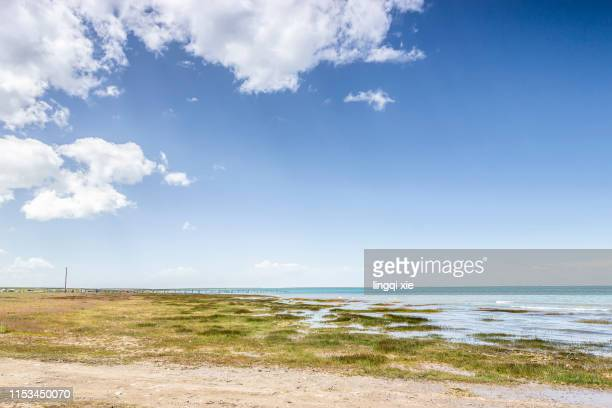 grassland and dirt road along the qinghai lake on the qinghai-tibet plateau in western china under blue sky and white clouds - vista marina fotografías e imágenes de stock