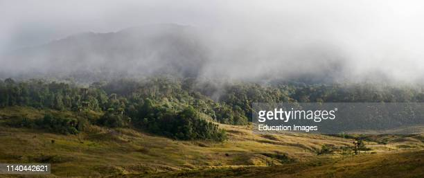 Grassland and forest at 9,000 feet at Tari Gap Highlands, Papua New Guinea.