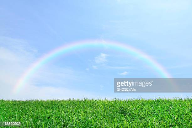Grassland and sky with rainbow