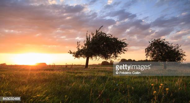 Grassland and small village at sunset