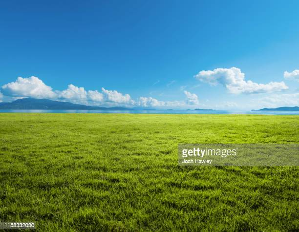 grassland background - horizon over land stockfoto's en -beelden