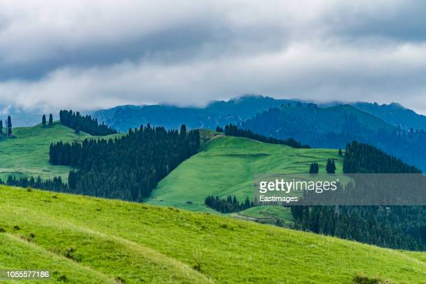 grassland landscape with meadows and mountains, xinjiang, china - xinjiang province stock pictures, royalty-free photos & images