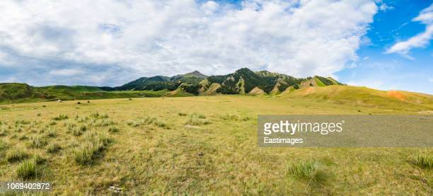 grassland landscape with meadows and mountains, xinjiang, china - llanura fotografías e imágenes de stock