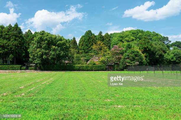 grassland - liyao xie stock pictures, royalty-free photos & images