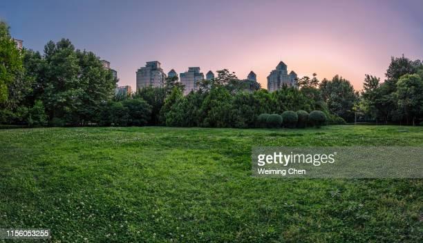 grassland - 平地 ストックフォトと画像