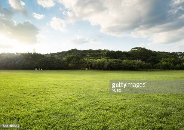 grassland - grass stock pictures, royalty-free photos & images