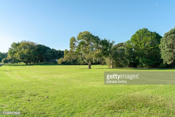 grassland sky and grass background in a park - tree stock pictures, royalty-free photos & images