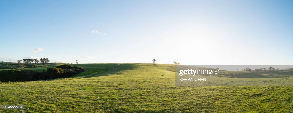 Grassland sky and grass background in a park : Foto stock