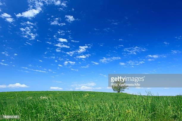 grassland tree and sky with clouds, hokkaido - 台地 ストックフォトと画像