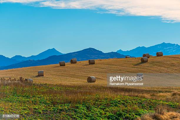 grassland with dry straw in roll - northland new zealand stock pictures, royalty-free photos & images