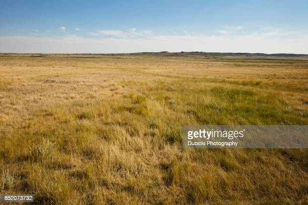grasslands national park - prairie stock pictures, royalty-free photos & images