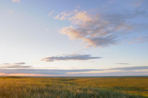 Grasslands 153486548