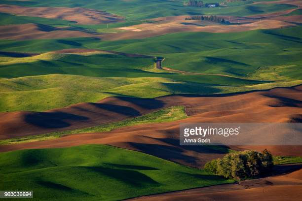 Grassy and fresh-plowed rolling hills of Palouse countryside in spring seen from Steptoe Butte State Park at sunset, Washington state
