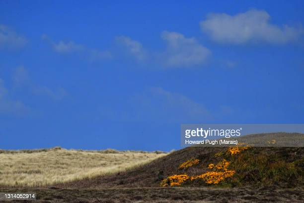 grassy dune landscape - howard pugh stock pictures, royalty-free photos & images