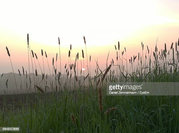 Grassy Field Against Sky During Sunset