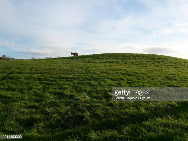 grassy field against sky - lorena day stock pictures, royalty-free photos & images