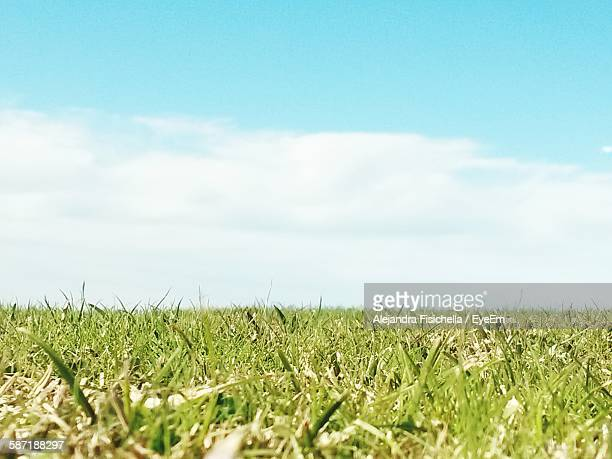 Grassy Field Against Sky