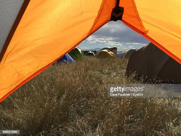 grassy field seen through tent - dave faulkner eye em stock pictures, royalty-free photos & images