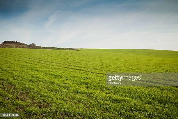Des pelouses vertes sur les falaises du Nord de la France