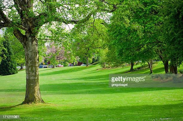 緑の芝生でグリーンレイクパークで Seattle ,WA