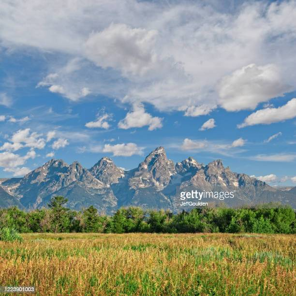 grassy meadow and teton range - jeff goulden stock pictures, royalty-free photos & images