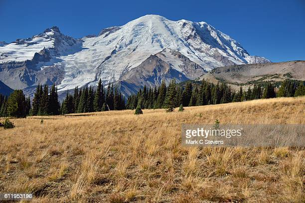 A Grassy Meadow Setting for a Stroll in Mount Rainier National Park