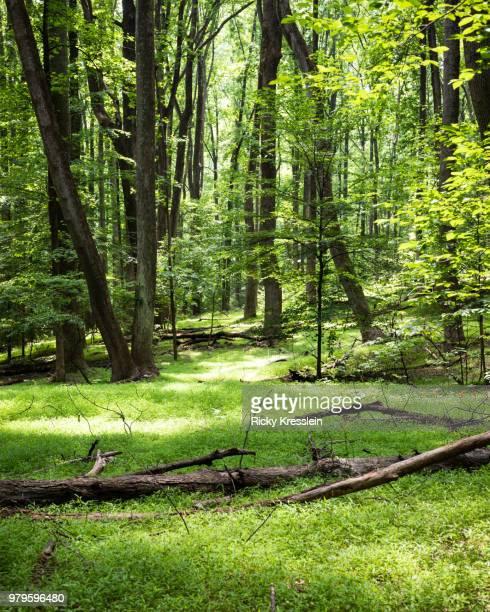 grassy on forest floor - foresta temperata foto e immagini stock