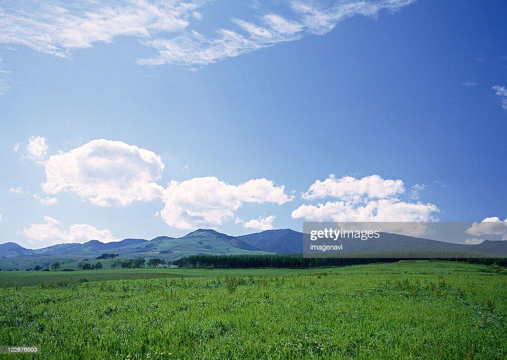 Grassy Plain : ストックフォト