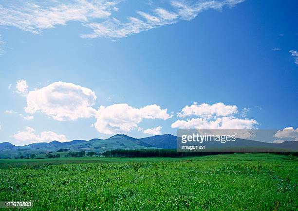 grassy plain - grass area stock pictures, royalty-free photos & images