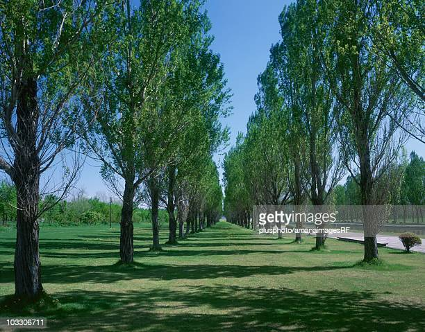 a grassy road lined with trees. sapporo, hokkaido, japan - plusphoto stock pictures, royalty-free photos & images