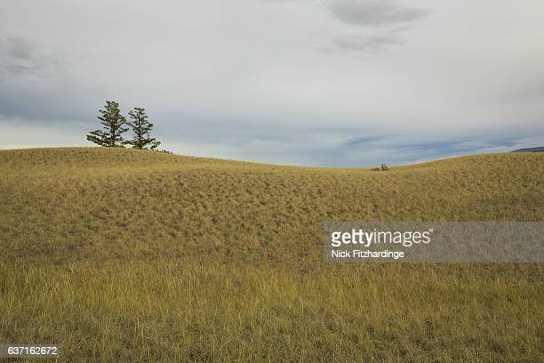 Grassy rollling hillside in the Cariboo Chilcotin region, British Columbia, Canada