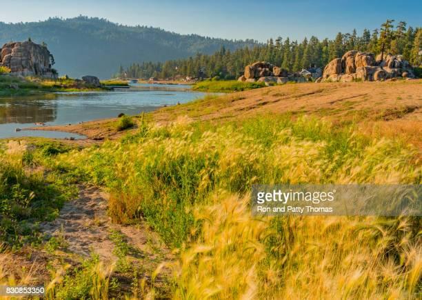 grassy shoreline in boulder bay, big bear lake, california (p) - san bernardino california stock pictures, royalty-free photos & images