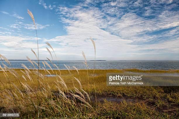 grassy south carolina shoreline - hilton head stock pictures, royalty-free photos & images