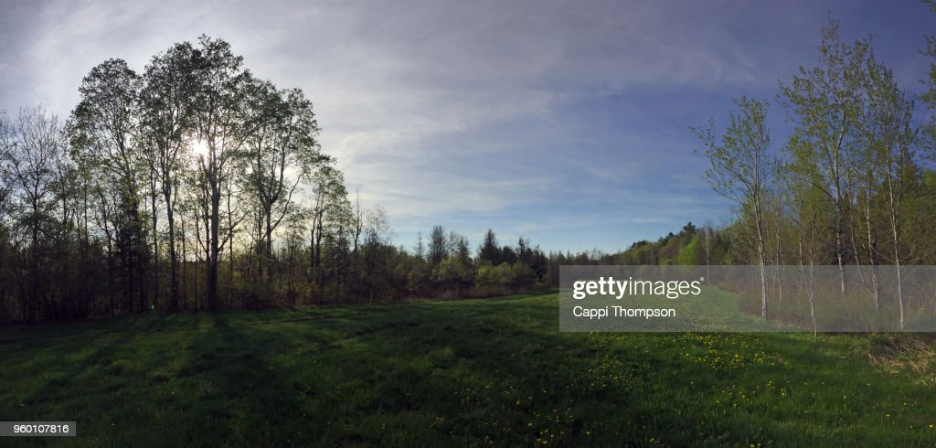 Grassy tree lined field with dandelion flowers growing during spring in Milan, New Hampshire USA : Stock-Foto